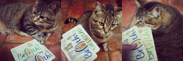 Treating Your Cat to Fancy Feast® Broths