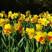 dallas blooms returns to Dallas this spring via genpink.com